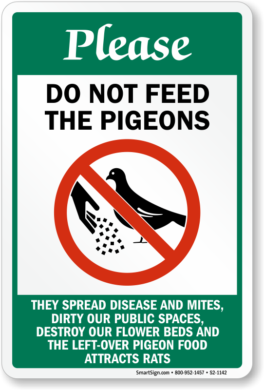 how to stop pigeons eating bird food